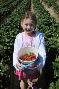 0150 She wants strawberries with long stems for dipping into chocolate