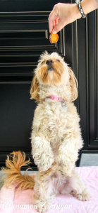 Toss Across Sweet Potato Chip dog treats are easy-peasy homemade treats your dog will love. They're so quick and simple, even novice bakers can make them.
