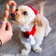 Pupper-Mint Candy Cane Twists-11